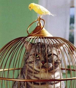 fotos-gatos-graciosas-p.jpg