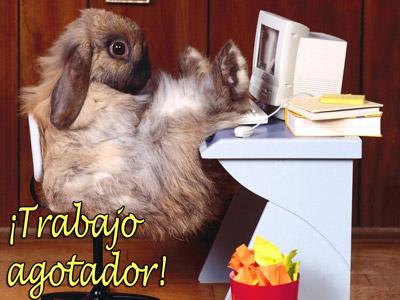 postales-graciosas-p.jpg